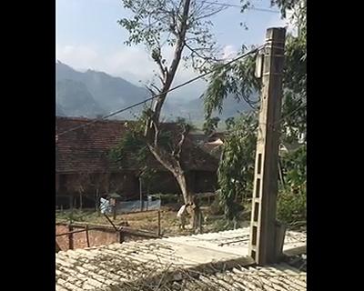 木が屋根を破壊