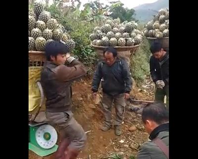 パイナップル担ぐ男達