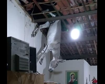 天井からロバ