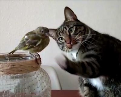 小鳥に猫パンチ