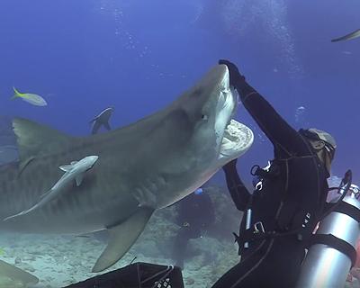 サメがダイバーに襲い掛かる