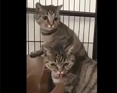 猫の前でクシを指で弾く