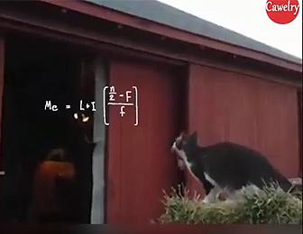 ネコジャンプ失敗