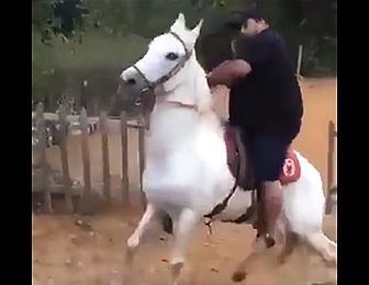 太った男性が白馬に乗った結果