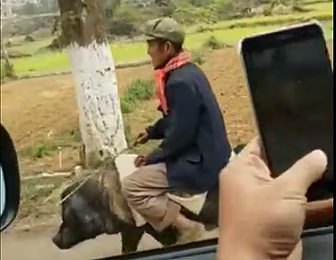 豚に乗るおじいちゃん