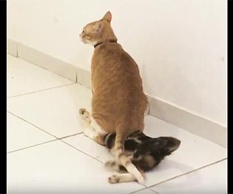 ネコの上に座るネコ