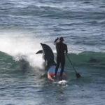 サーファーにイルカが激突