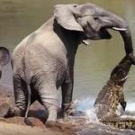 動物を助ける動物