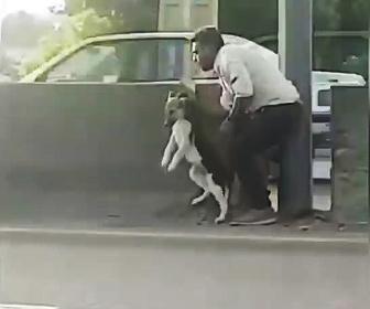 犬を助ける