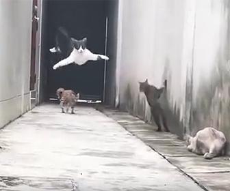 猫の身体能力が凄い