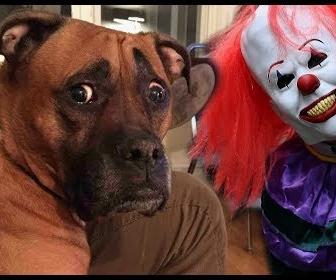 マスクをして犬を驚かせる