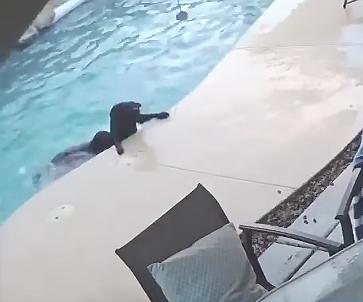 友達を助ける犬