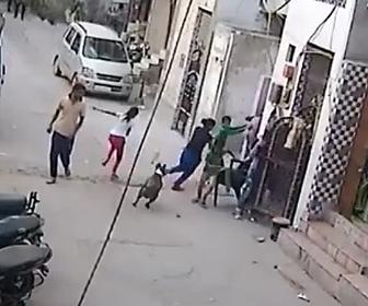 インドの野良犬 狂犬病