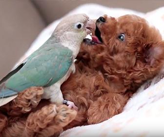 子犬とオオム