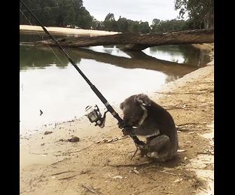 コアラが釣りをする