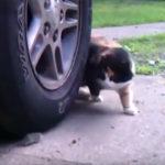 猫VSネズミ
