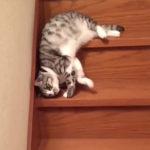 階段を下りるネコ