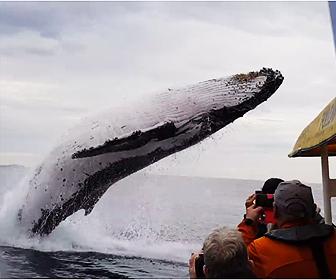 鯨が大ジャンプ