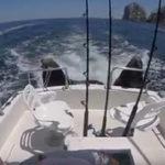 船に飛び乗るアシカ