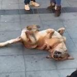 犬がダンス