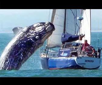 クジラVSボート