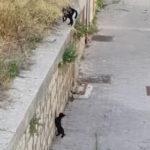 子猫を助ける母猫