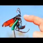 世界の危険な虫10選