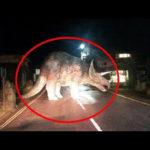 【動画】恐竜??カメラに映ったとんでもない映像・画像