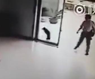 ガラスに突っ込む犬