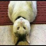 ジワジワ来るww ネコのおもしろ画像集