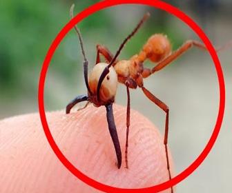 世界で最も危険な恐ろしい虫 5選