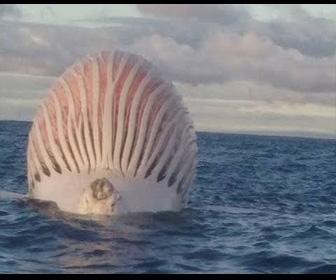 凄い…海で発見された5の奇妙なモノ