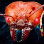 「ゾンビ動物」を生み出す11種の寄生生物、植物