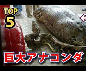 衝撃的すぎる大蛇!巨大アナコンダTOP5ランキング!