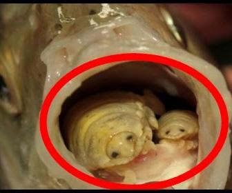 【動画】寄生虫だらけ!地球上に存在する恐ろしい寄生虫7選