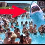 【動画】とんでもない場所に現れたサメ6選