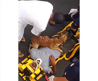 【動画】倒れた飼い主を心配して離れようとしない犬が可愛い