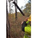 【動画】枯れ木を切り倒すが猛スピードで枝が飛んで来る衝撃映像