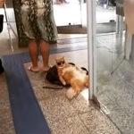 【動画】銀行の冷房で寛ぐネコが可愛い