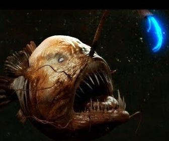 【動画】マリアナ海溝に棲む驚くべき生物トップ10