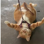 【動画】家に帰りたくない猫が必死に抵抗する姿が可愛い