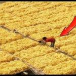 【動画】世界の驚くべき農場TOP5