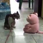 ぬいぐるみに喧嘩を売るネコ