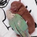 仲が良い子犬と小鳥