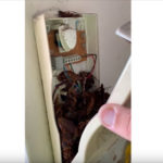 【動画】インターホンのカバーを開けたら恐ろしい物が大量に出てくる